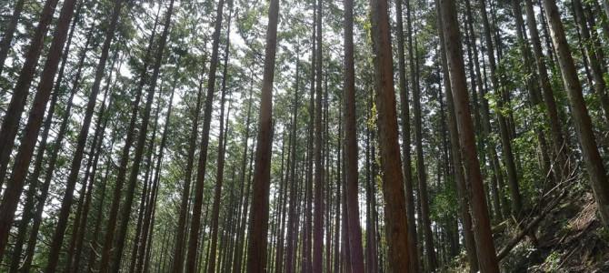 温暖化から地球を守る薪ストーブ